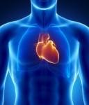 heart-128x164