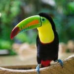toucan-thumb-200x199-30161
